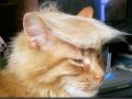 Cat trumped